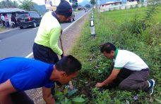 Baso Semarak Menanam 100 Mahoni di Labuah Luruih,Padang Tarok