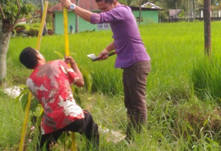 Amankan Bibit Mahoni, Tanaman di Jalur Bayua -Linggai Dipagar