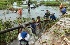 Partisipasi Warga Tinggi Goro Danau Berlanjut 92 KJA Dibersihkan