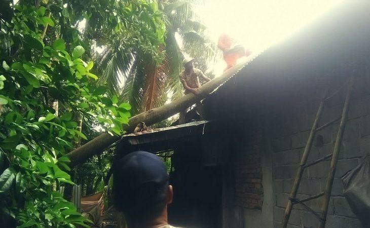 Angin Kencang, Pohon Tumbang di Padang Baru, Rumah Efendi Punago Rusak di Batukambing
