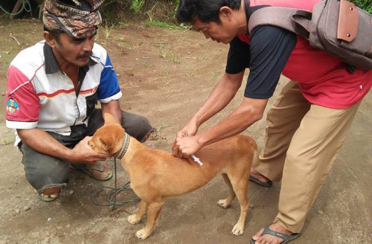 Antisipasi Penyakit Anjing Gila, Distan Agam Gencarkan Vaksinasi Rabies
