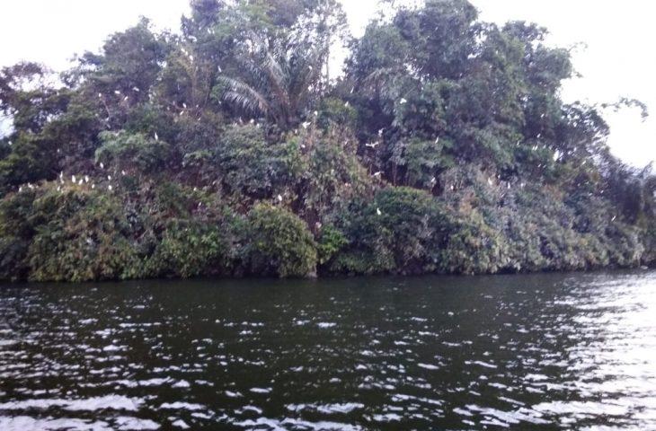 Potensi Wisata Pulau Bangau Duo Koto