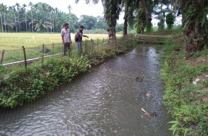 Budidaya Ikan Nila, Potensi Menjanjikan Warga Padang Tongga