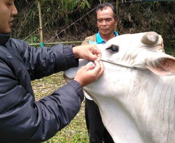 Tim PTK Intensifkan Pemeriksaan Hewan Kurban