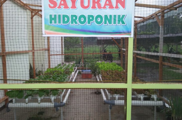 Budidaya Hidroponik di Pekarangan Kantor Camat Sungai Pua