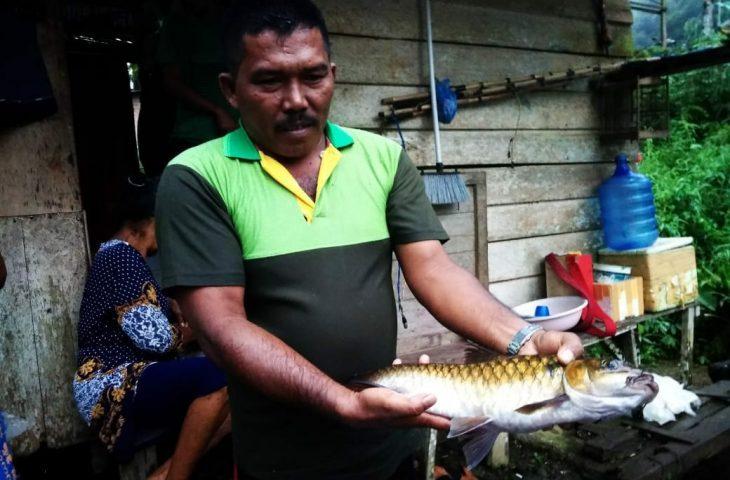 Warga Labuah Baru Kembangkan Gariang di Kolam Air Deras