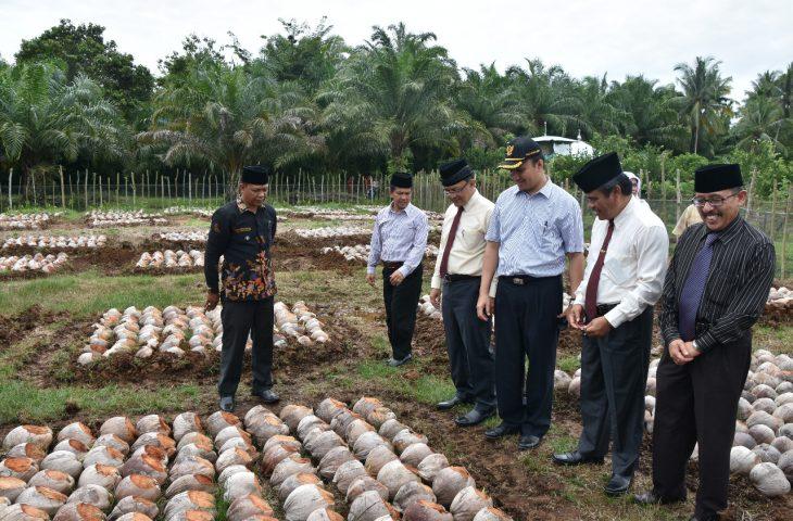 Agam Targetkan 30 Ribu Batang Bibit Kelapa Tersalurkan Selama 2018