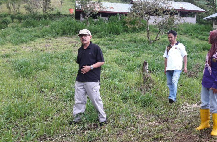 Distan Agam Kembangkan Rumput Gajah Taiwan