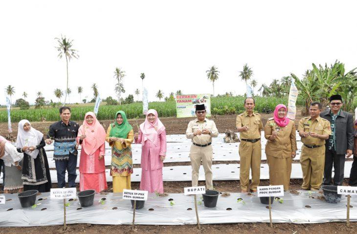 Sumbar Canangkan Gerakan Tanam Cabe Bayam di Kabupaten Agam