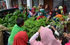 Sebanyak 100 Ribu Bibit Tanaman Hortikultura Siap Disalurkan Tahun Ini