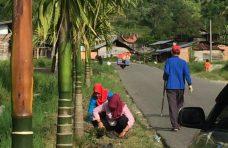 Perindah Jalan Utama, Pemerintah Kecamatan IV Koto Tanam Pucuk Merah
