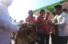 Raih Juara Umum, Sapi Agam Mendominasi Livestock Expo Sumbar 2019