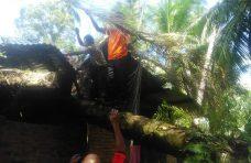 Rumah Warga Tiku Utara Ditimpa Pohon, Dinsos Agam Berikan Bantuan