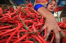 Harga Cabai Kembali Turun di Sejumlah Pasar Tradisional Agam