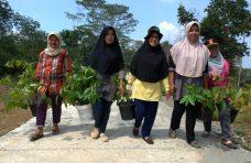 Antisipasi Longsor, Pemerintah Kecamatan Palembayan Tanam 1.000 Mahoni