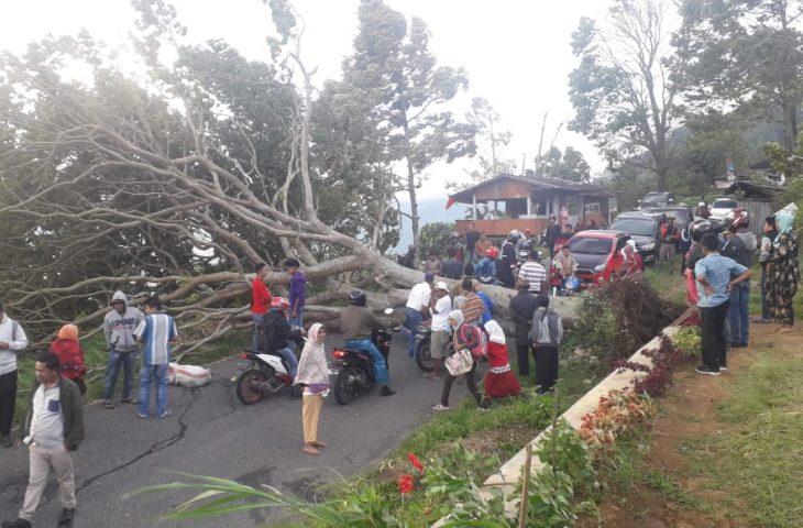 Angin Kencang Tumbangkan Pohon di Ruas Kelok 44