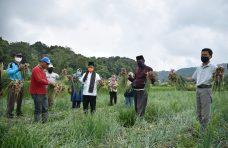 Tinjau Lahan Pertanian di Matur di Tengah Covid-19, Indra Catri: Pertanian Jangan Sampai Terhenti
