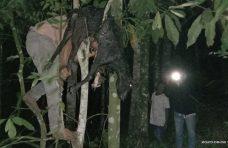 Beruang Masuk Pemukiman di Palembayan- Kambing Warga Diterkam