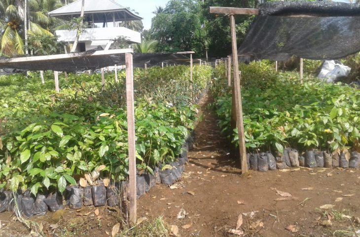 Goro Badunsanak, Nagari Lubuk Basung Targetkan Tanam 50.000 Pohon
