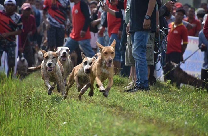 PORBI Palupuah Gelar Buru Babi Sumbar-Riau di Rimba Alam Sarasah Jaya Pasia Laweh