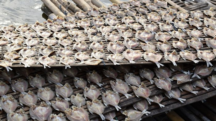 Tangkapan Berkurang, Ikan Kering Nelayan Tiku Alami Kenaikan Harga