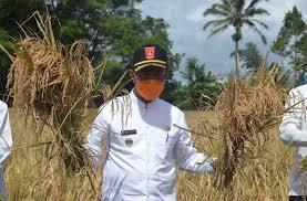 Hari Tani Nasional: Momentum Memperkokoh Pertanian di Agam