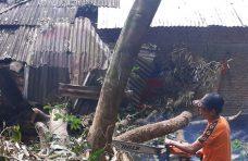 Satu Unit Rumah di Malalak Tertimpa Pohon