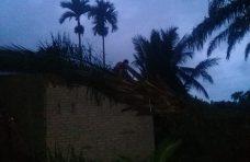 Pohon Tumbang Timpa Dapur Rumah Warga di Manggopoh