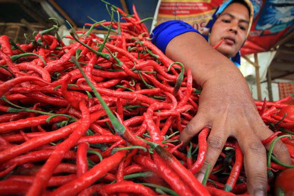 Pasokan Melimpah, Harga Cabai Merah di Pasar Tradisional Agam Turun