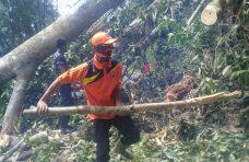 Hujan Disertai Angin Kencang, Pohon Tumbang di Matur Tutup Akses Jalan