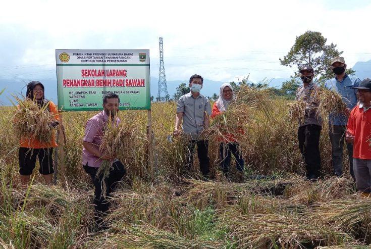 Produksi Benih Unggul Lokal Minim, Distan Agam Dorong Ciptakan Petani Penangkar Melalui SL