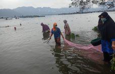 Lestarikan Danau Maninjau, KPGH Gelar Festival Rinuak