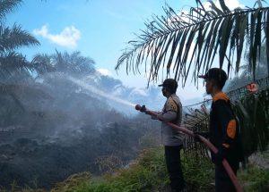 Lahan Perkebunan Kelapa Sawit Kembali Terbakar di Durian Kapeh