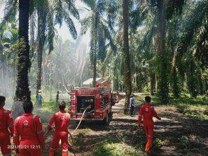 Kebakaran Lahan Berhasil Dikendalikan, 1 Hektar Kebun Sawit Hangus