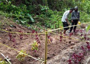 Rabu Krida, Kecamatan Matur Buat Taman di Bukik Apik