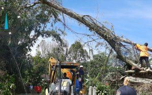 Pembersihan Material Pohon Tumbang Menimpa Makam Tuanku Nan Renceh Dilanjutkan