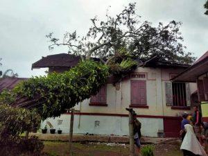 Angin Kencang Dini Hari, Rumah Gadang Ditimpa Pohon di Sariak