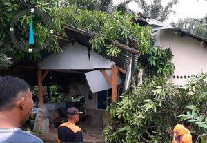 Sebagian Wilayah di Agam Dilanda Angin Badai, Pohon Bertumbangan