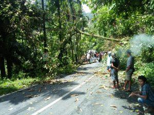 Sempat Tertutup Pohon Tumbang, Ruas Jalan Provinsi di Lubuak Sao Sudah Bisa Dilewati