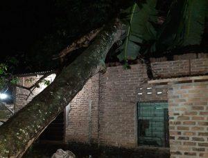 Pohon Tumbang Timpa Rumah Warga Jorong III Sangkir Ilia