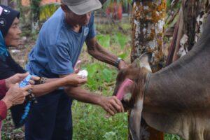 Tradisi di Silayang, Hewan Kurban Didandani Sebelum Disembelih
