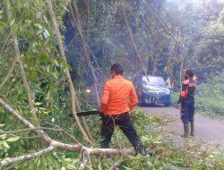 Angin Kencang Tumbangkan Pohon Beringin Besar di Kelok 44